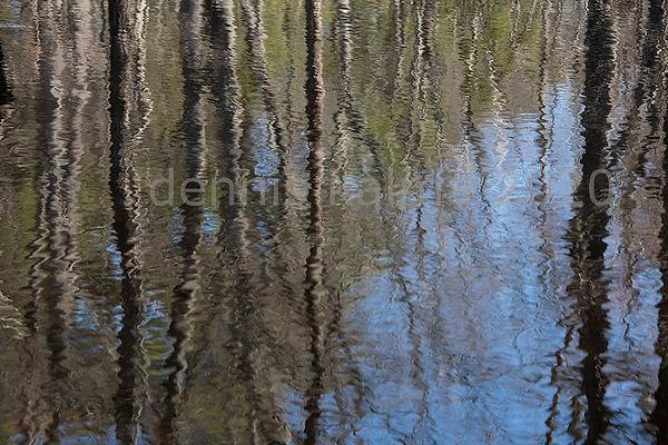 FA KD pond