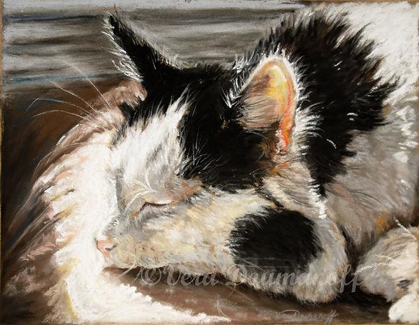 FA DV kitty