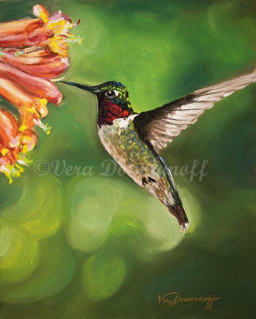 FA DV hummingbird
