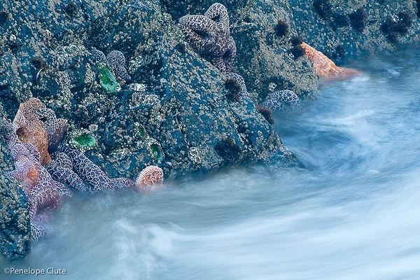 FA CP starfish