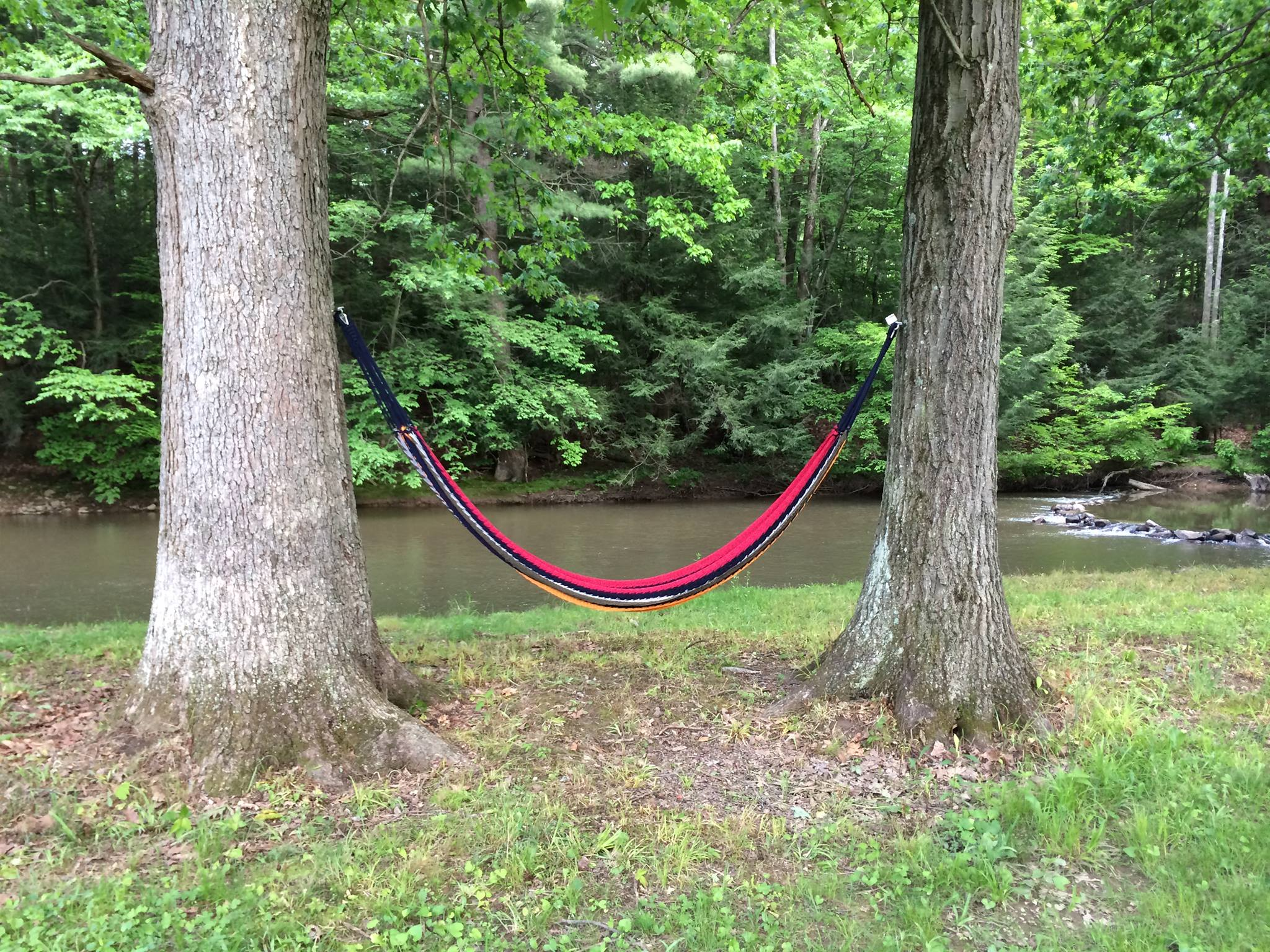 creek side hammock