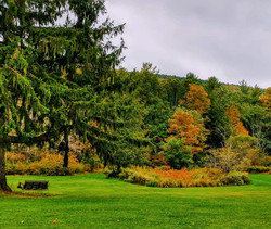 fall trees and grounds