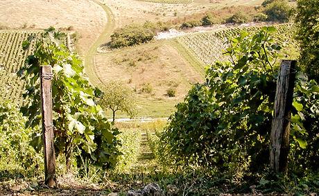 Vins Sancerre | Domaine Emile Balland