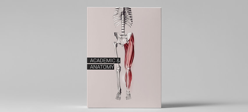 Academic & Anatomy