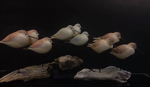 David Personius-Alaska Shorebird groups on driftwood