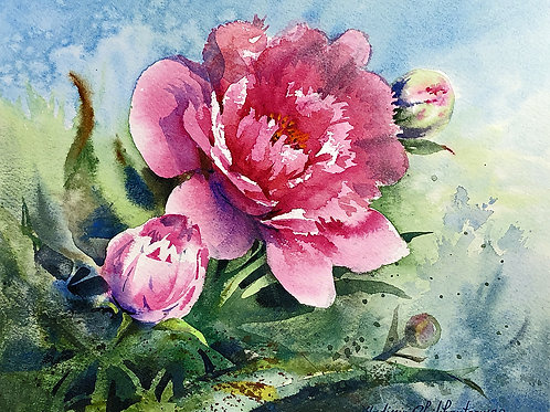 Vladimir Zhikhartsev GEORGESON PEONY original watercolor  unframed   8in x 10in