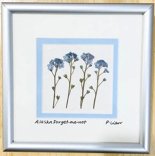 "Pauline Lian-Alaska Forget-me Nots-Framed-8"" x 8"""