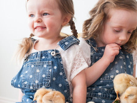 baby chick sessions!