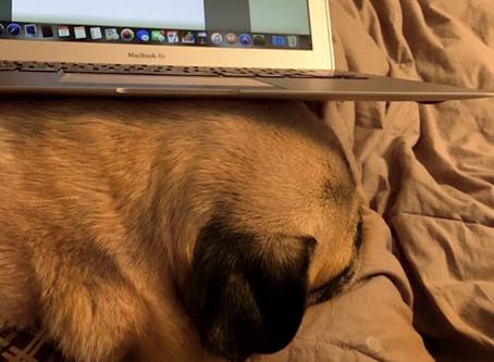 How to write a wedding ceremony. (Laptop handy. Pug optional.)