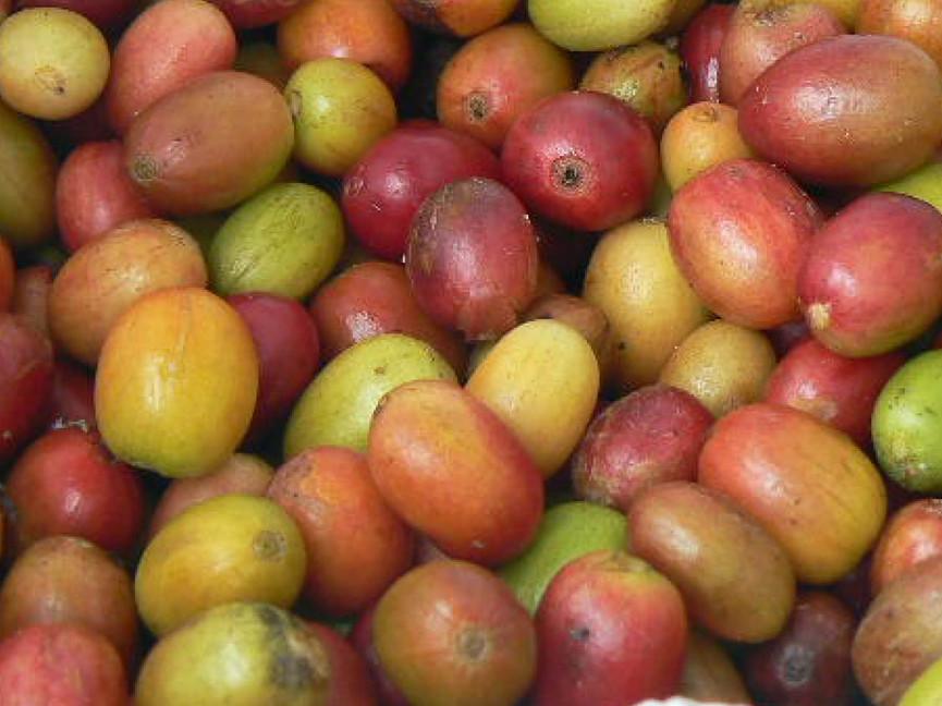 Vruchten 9