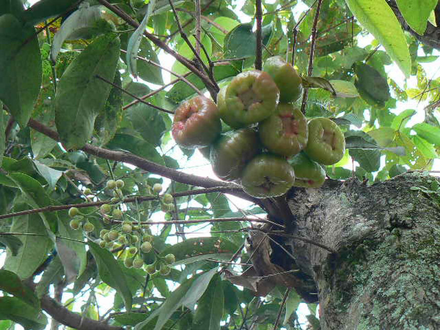 Vruchten 11