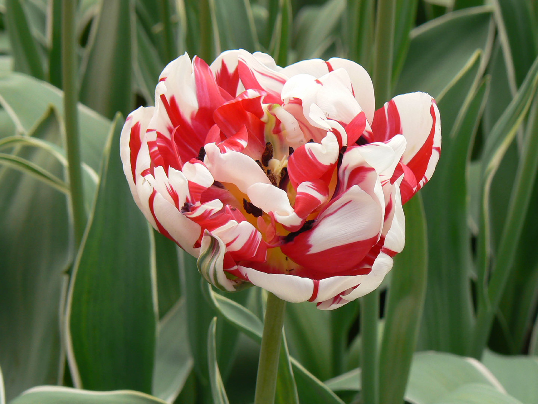 Bloemen 8