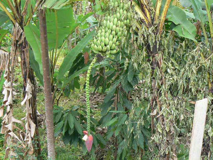 Vruchten 13