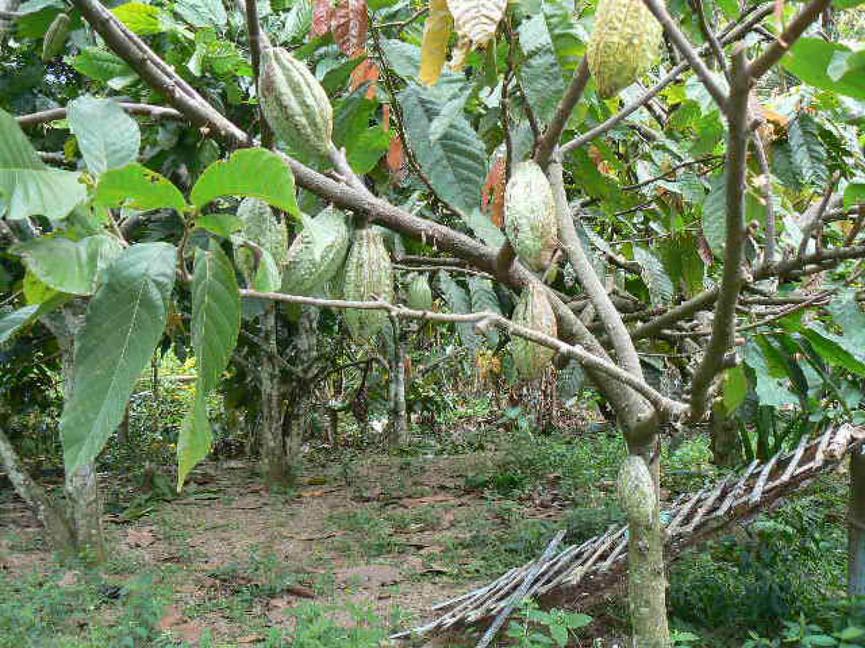 Vruchten 12