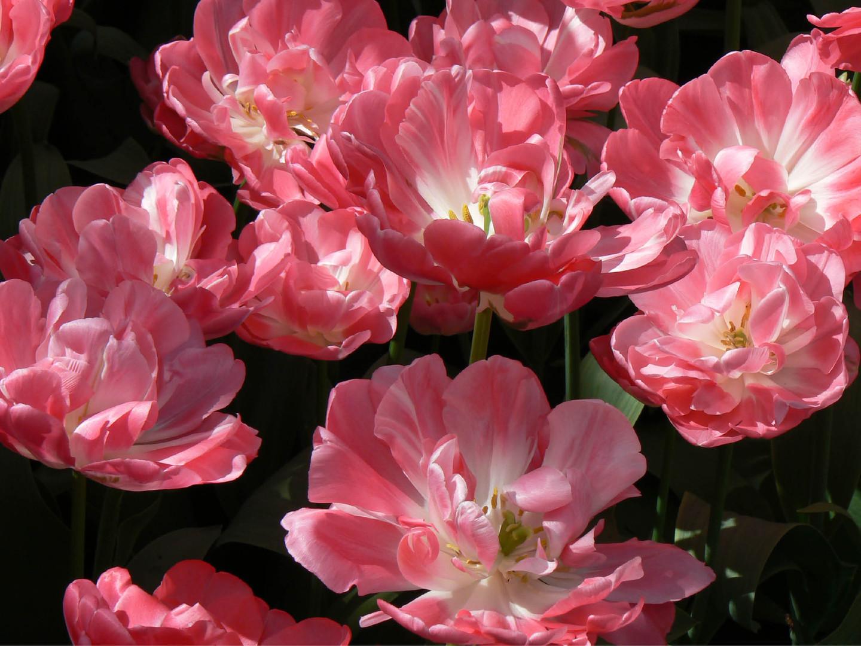 Bloemen 9