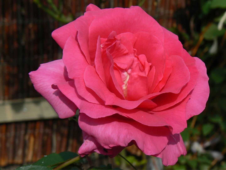 Bloemen 6