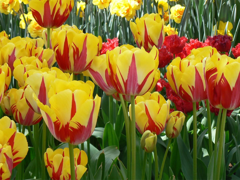 Bloemen 12