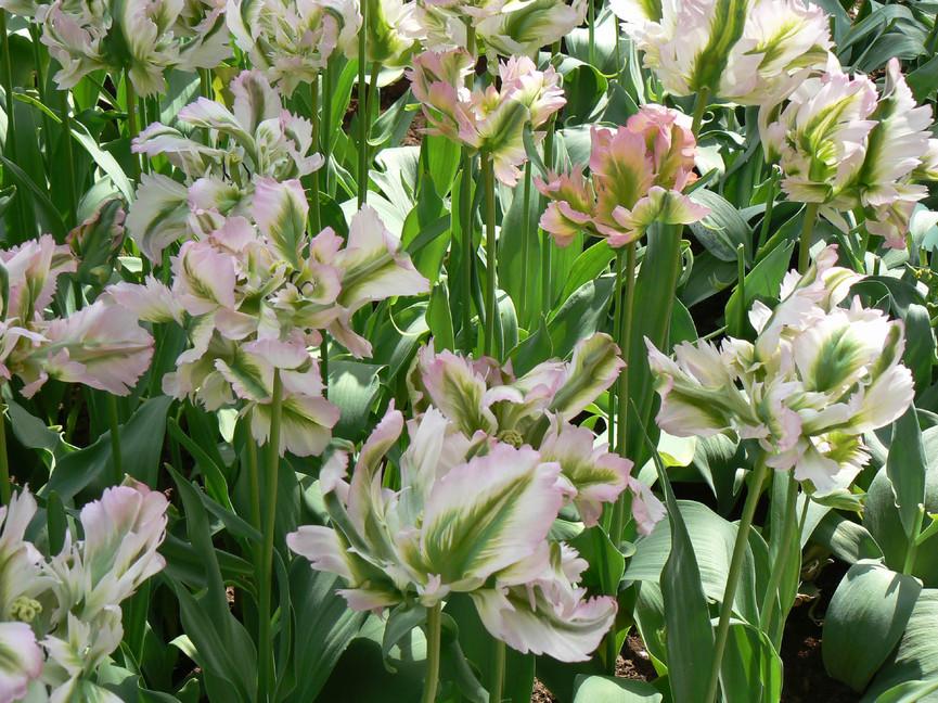 Bloemen 13