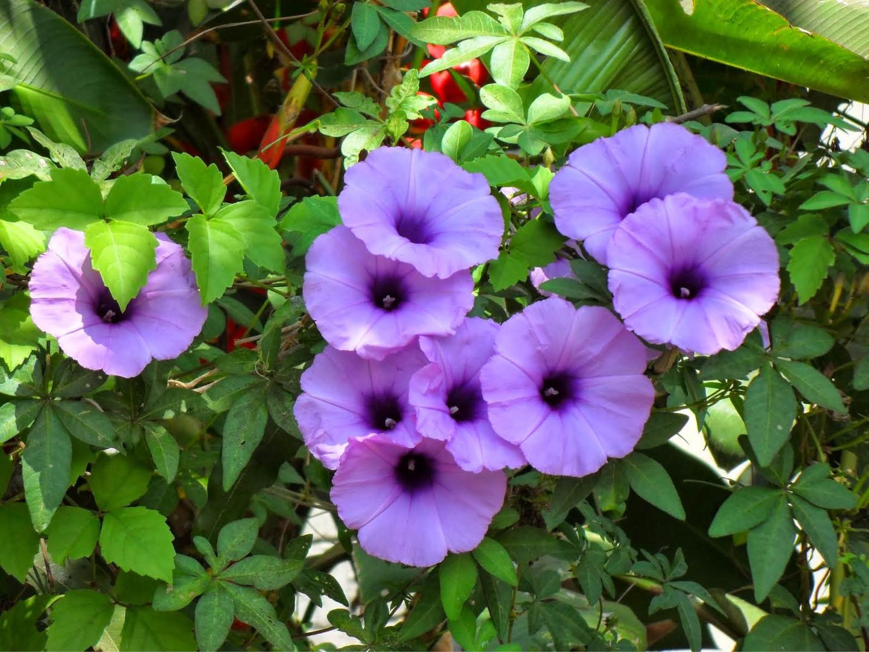 Bloemen 16