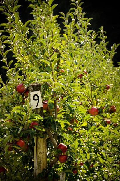 'L'Orto' translates to 'Vegetable Garden'