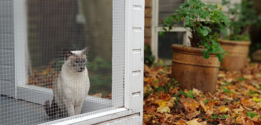 Cats Autumn Leaves