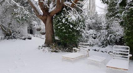 Garden Snow