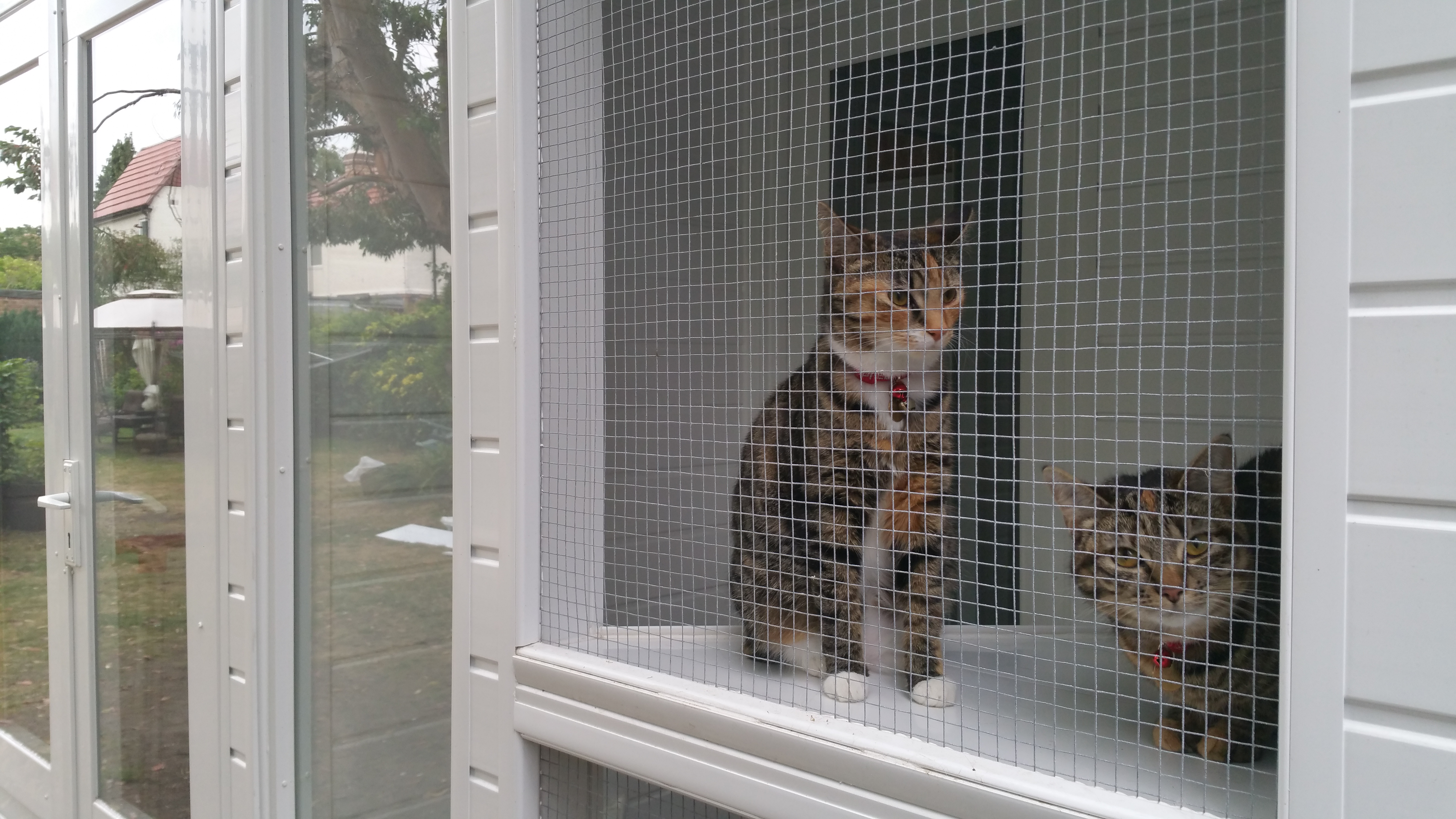 Cats in the pen