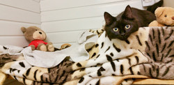 Comfy Kitten
