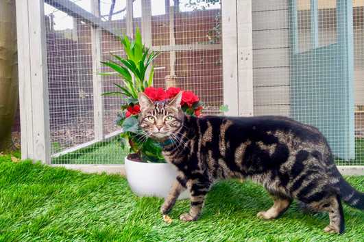 Cute Mia at the cattery