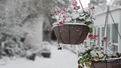 Snowy hanging basket