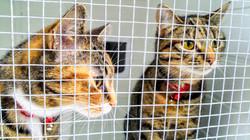Catty friends