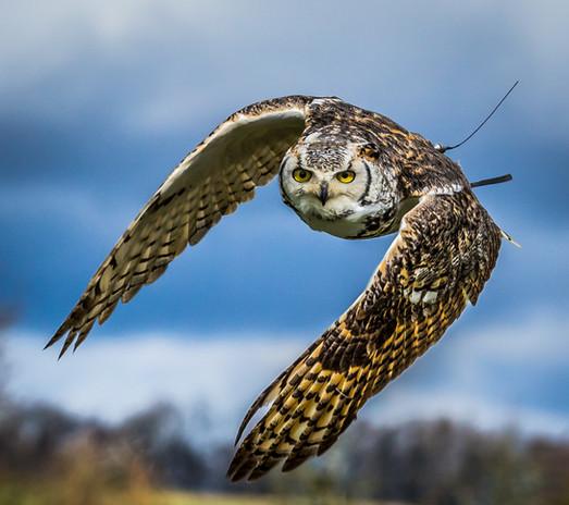 National Centre Birds of Prey