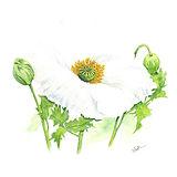 Botanical5.jpg