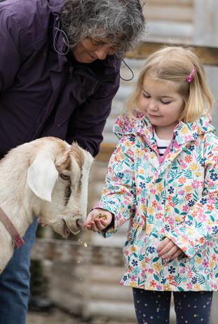 Goat feeding.jpg