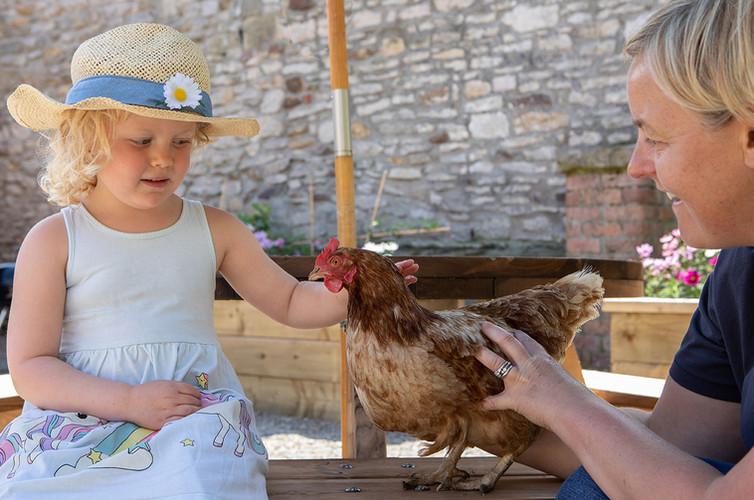 Chicken Feeding