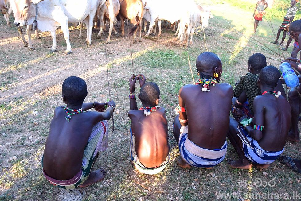 Taste the blood of Hamer tribe - www.sanchara.lk