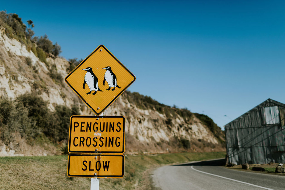Oamaru penguins