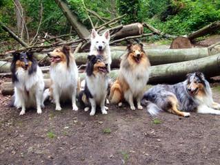 """""""Wieviel Hunder'l sollen es denn sein?"""""""
