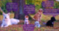 Hundeschule StadtWolf.com - Individuelles Training