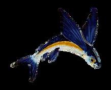 flyingfish barbados.png