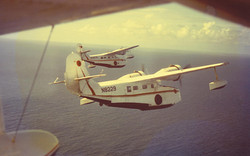 4 Goose Fly-By - The memorial tribute to Gov. Cyril King.1/9/78