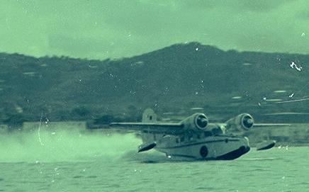 Goose in St. Croix
