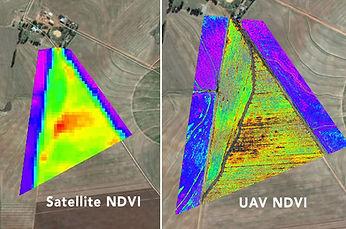 Drone NDVI Crop Health