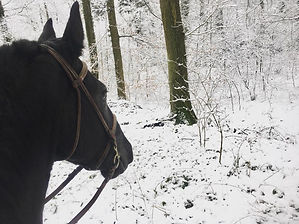 EquiPrest - Portait d'un cheval dans la neige