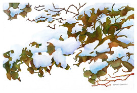 Early snow on Autumn Leaves