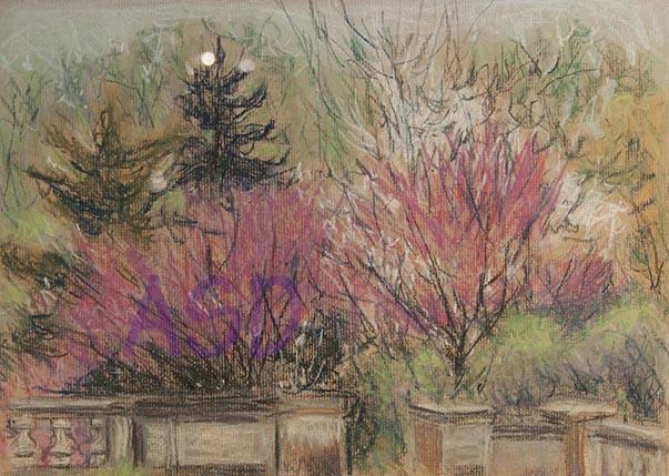 Redbud trees bloom