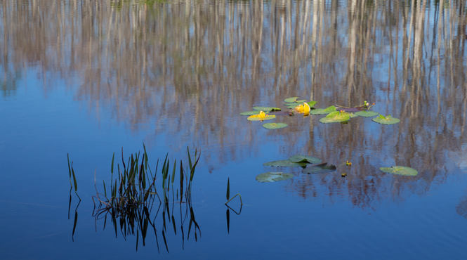 Monet Reflections