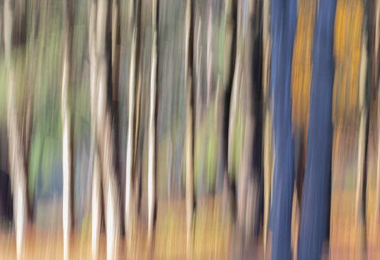 Fall Forest 1