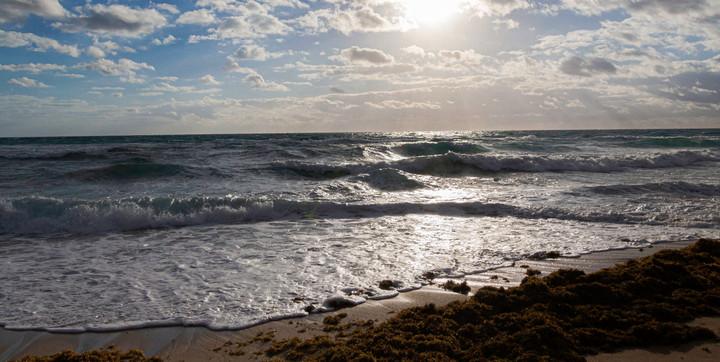 Seaweed In The Surf