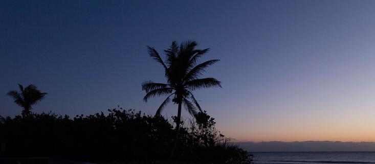 Purple Tropical Sunrise